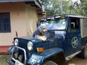 mitsubishi-jeep-1987-others-for-sale-in-kurunegala